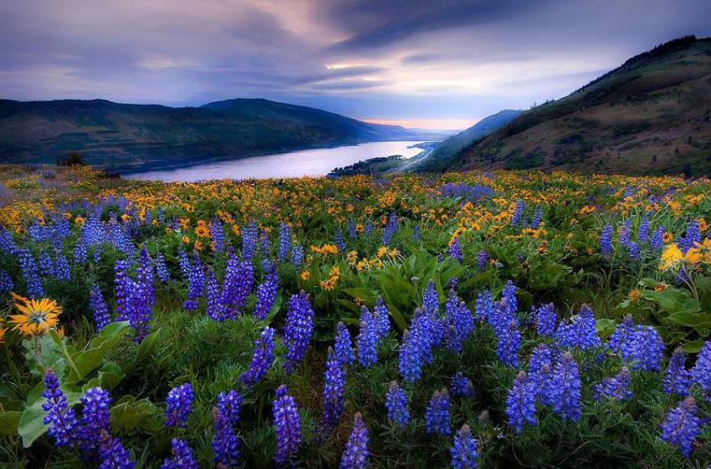 Цветы алтайского края с названиями